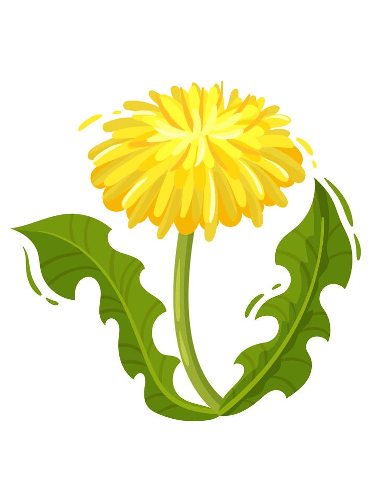 Dandelion clipart download