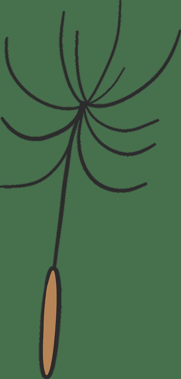 Dandelion clipart transparent 10
