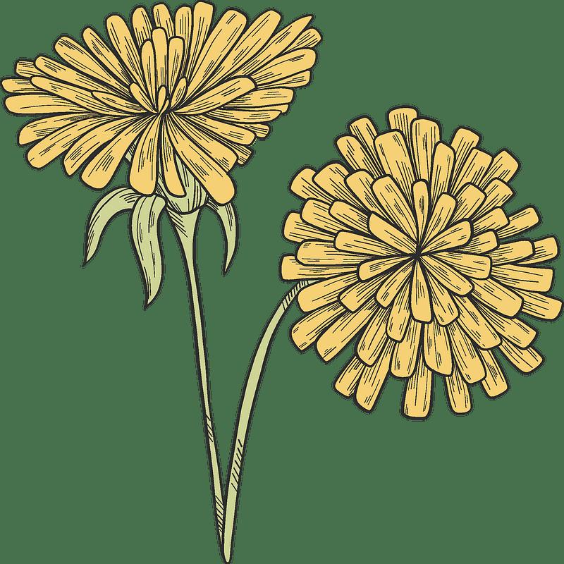 Dandelion clipart transparent 2