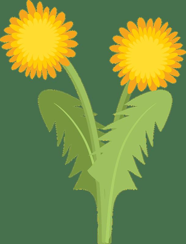 Dandelion clipart transparent 4