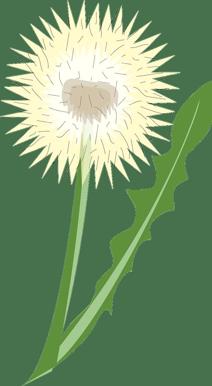 Dandelion clipart transparent 6