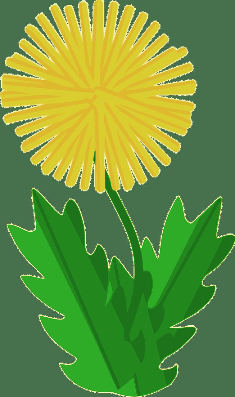 Dandelion clipart transparent 8