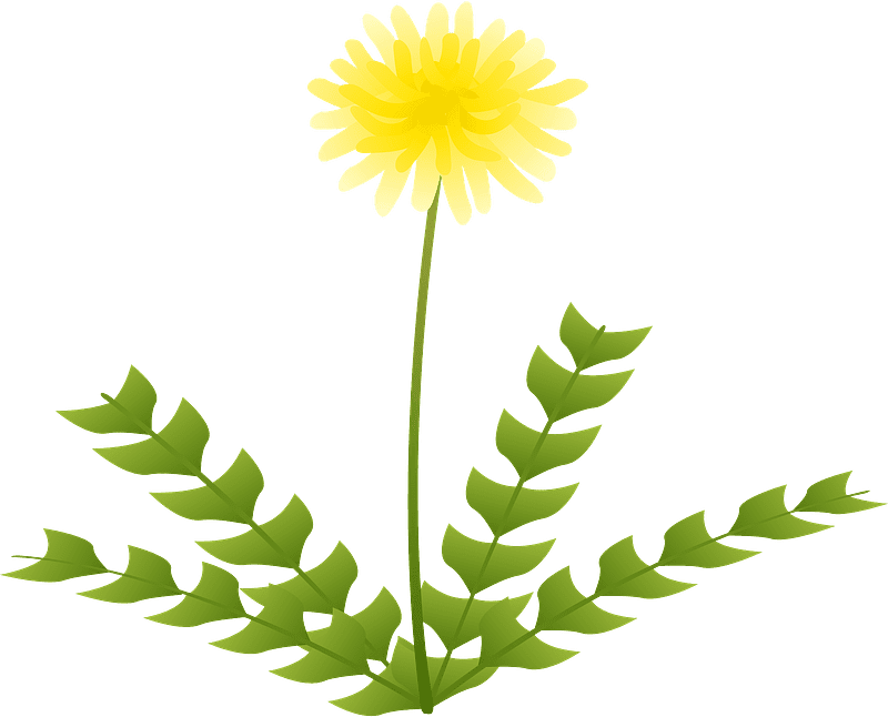 Dandelion clipart transparent background 10