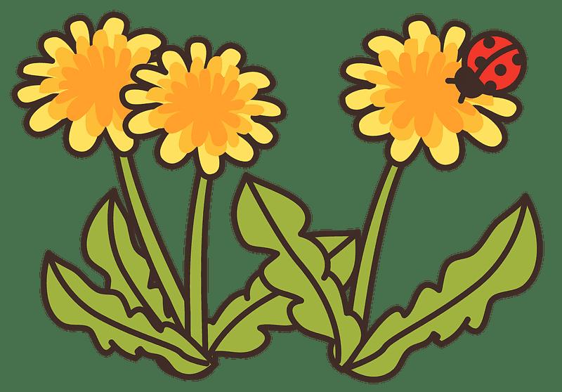 Dandelion clipart transparent background 12