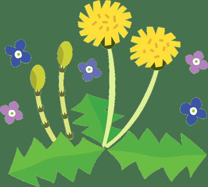 Dandelion clipart transparent background 13