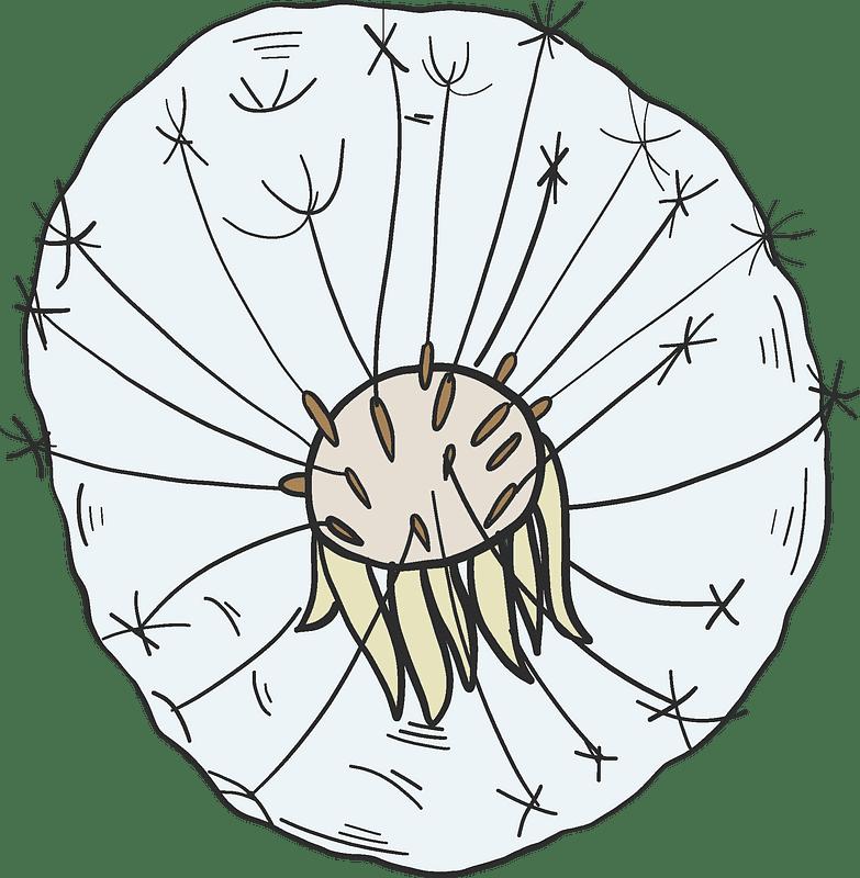 Dandelion clipart transparent background 2