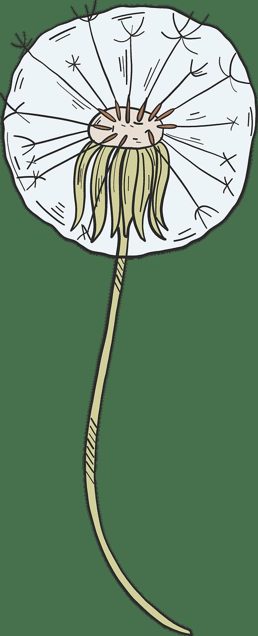 Dandelion clipart transparent background 3