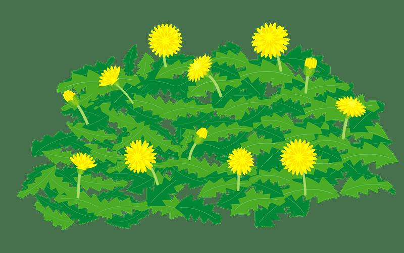 Dandelion clipart transparent background 6