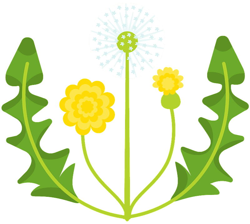 Dandelion clipart transparent free