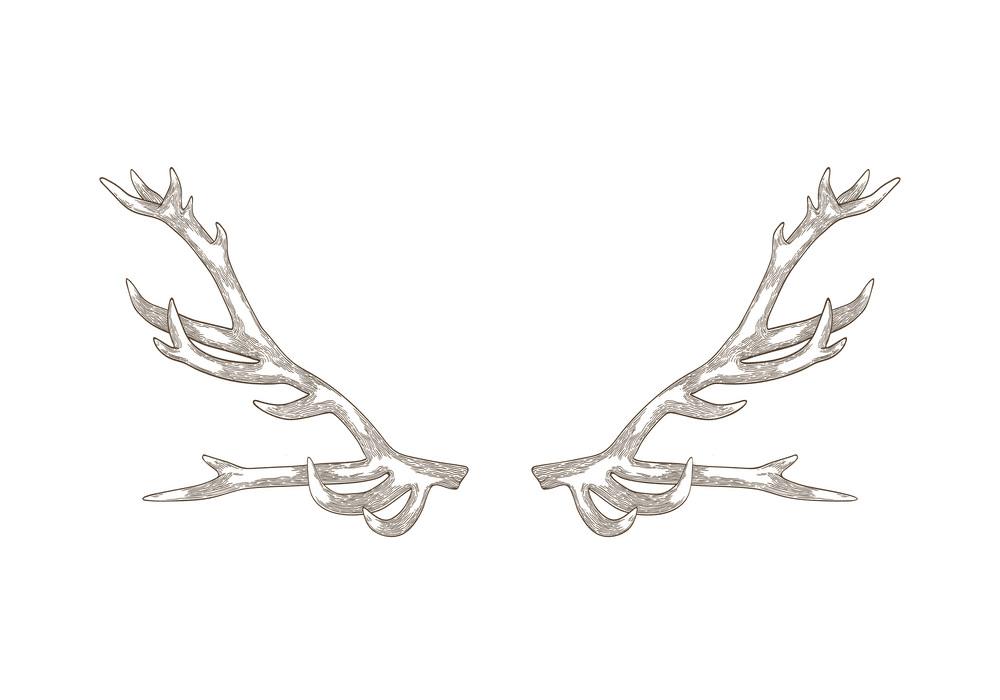 Deer Antlers clip art png