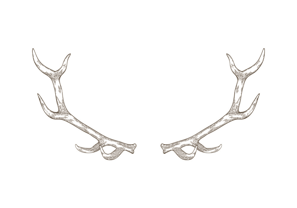 Deer Antlers clip art
