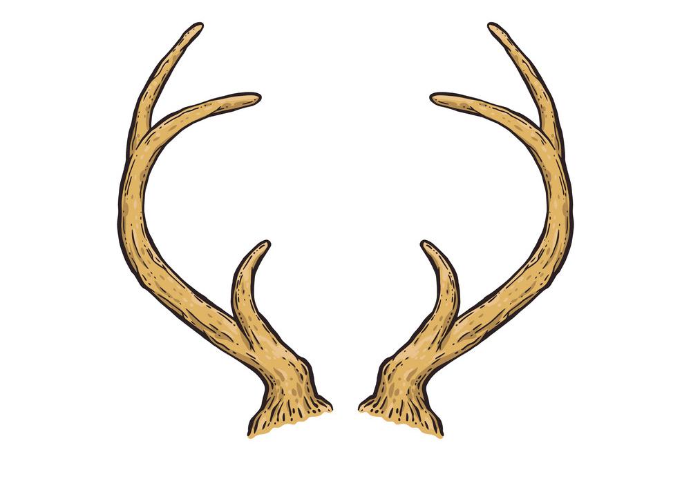 Deer Antlers clipart png free