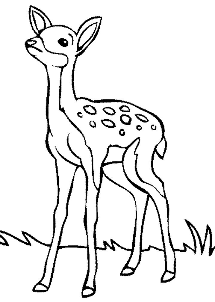 Deer Black and White clipart free