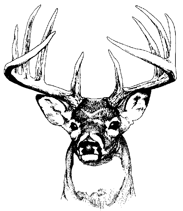 Deer Black and White clipart images