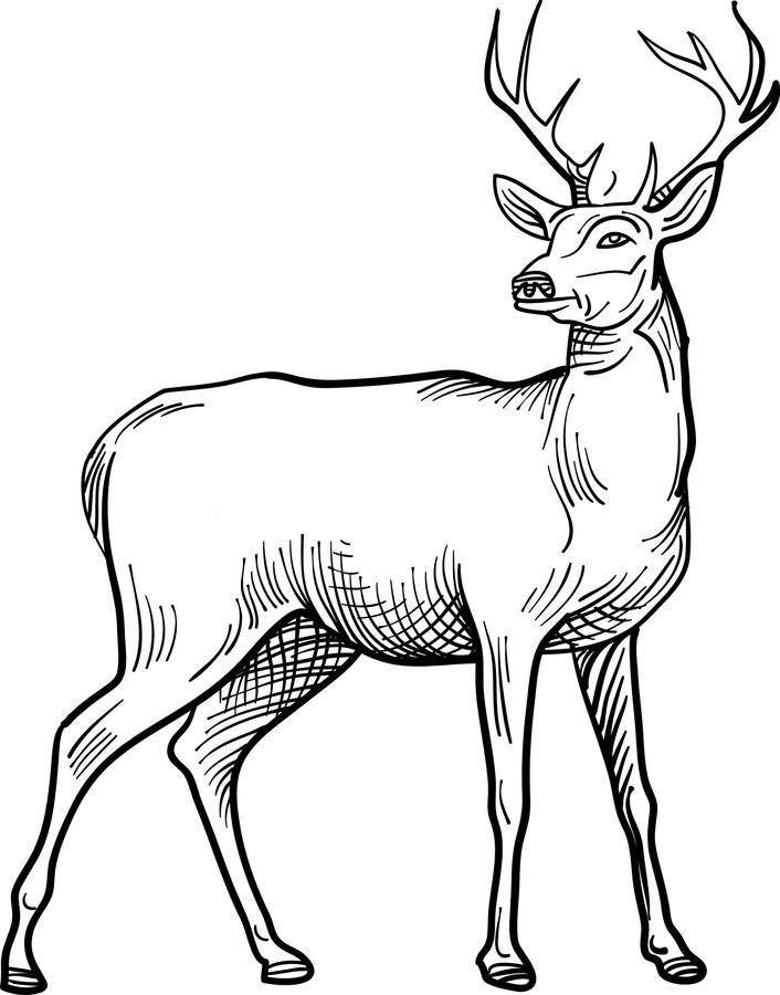 Deer Black and White clipart png free