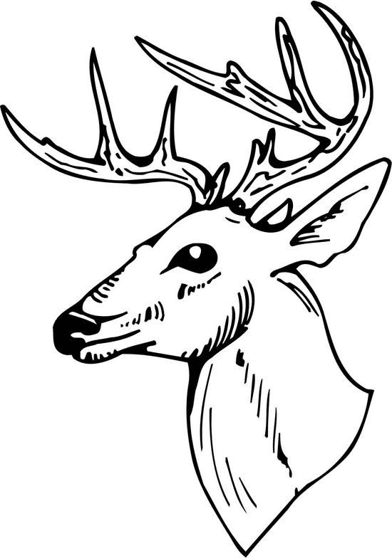 Deer Black and White clipart png image