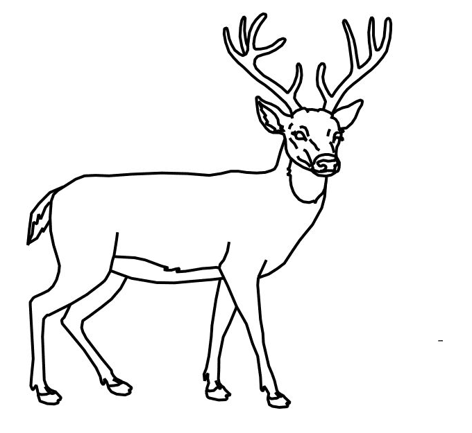Deer Black and White clipart png