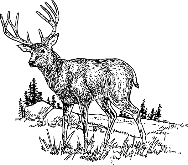 Deer Clipart Black and White free image
