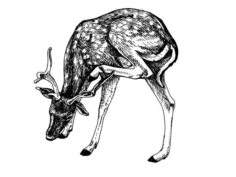 Deer Clipart Black and White image