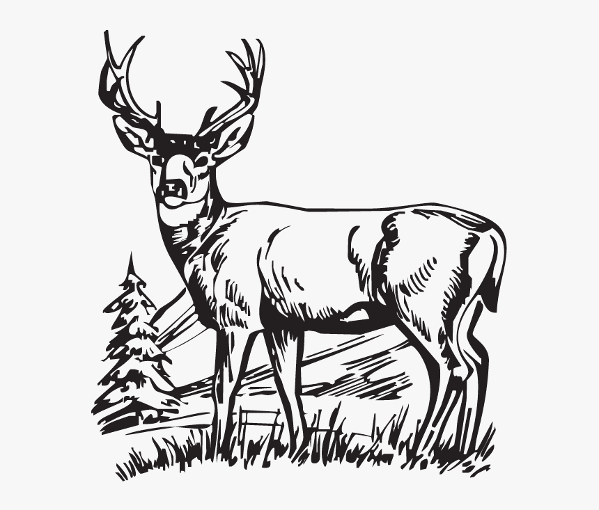 Deer Clipart Black and White images