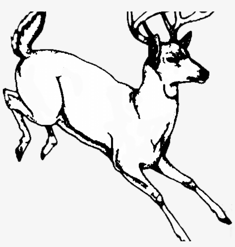 Deer Clipart Black and White png free