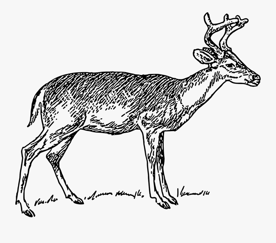 Deer Clipart Black and White png images