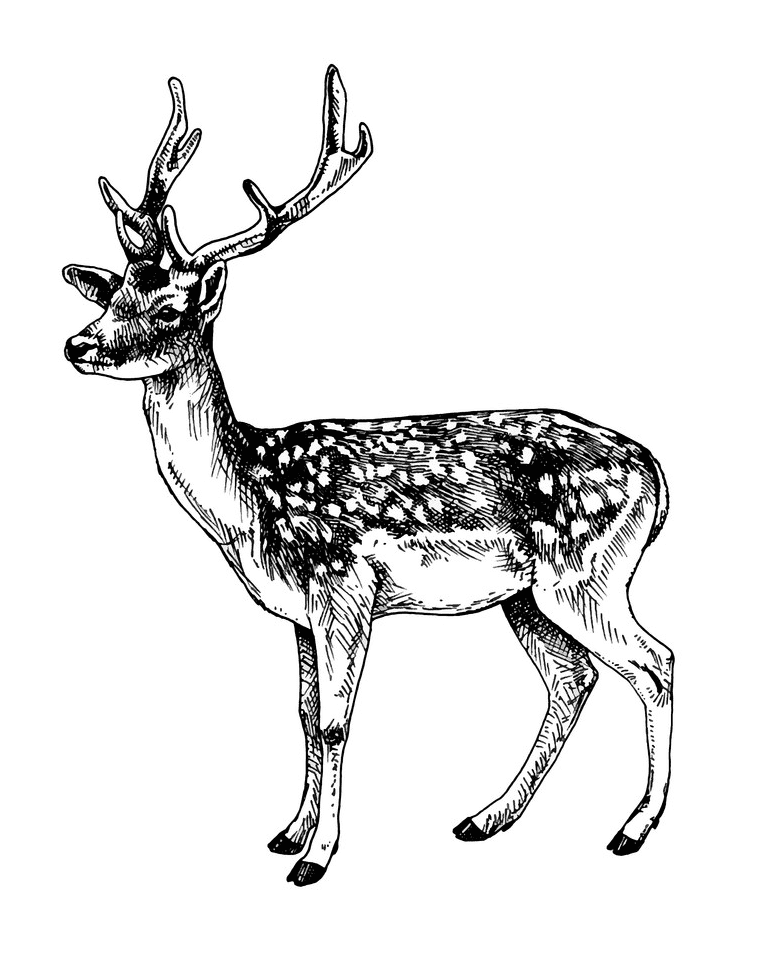 Deer Clipart Black and White png