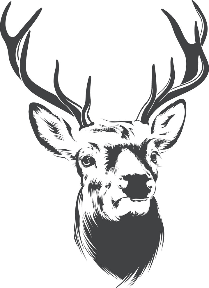 Deer Head clipart free images
