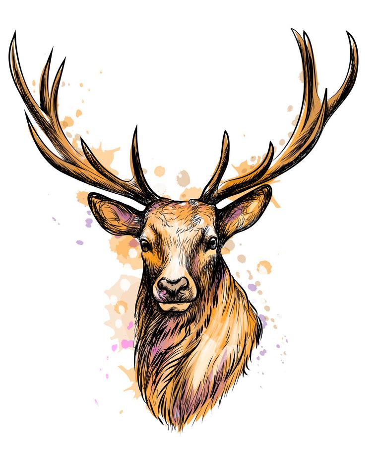 Deer Head clipart free
