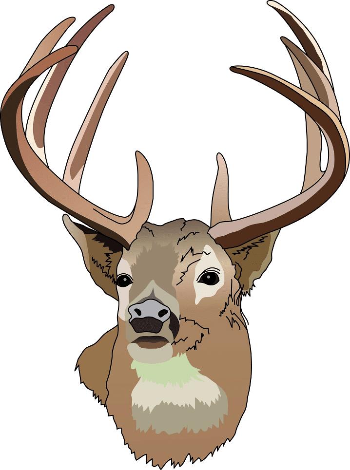 Deer Head clipart png free