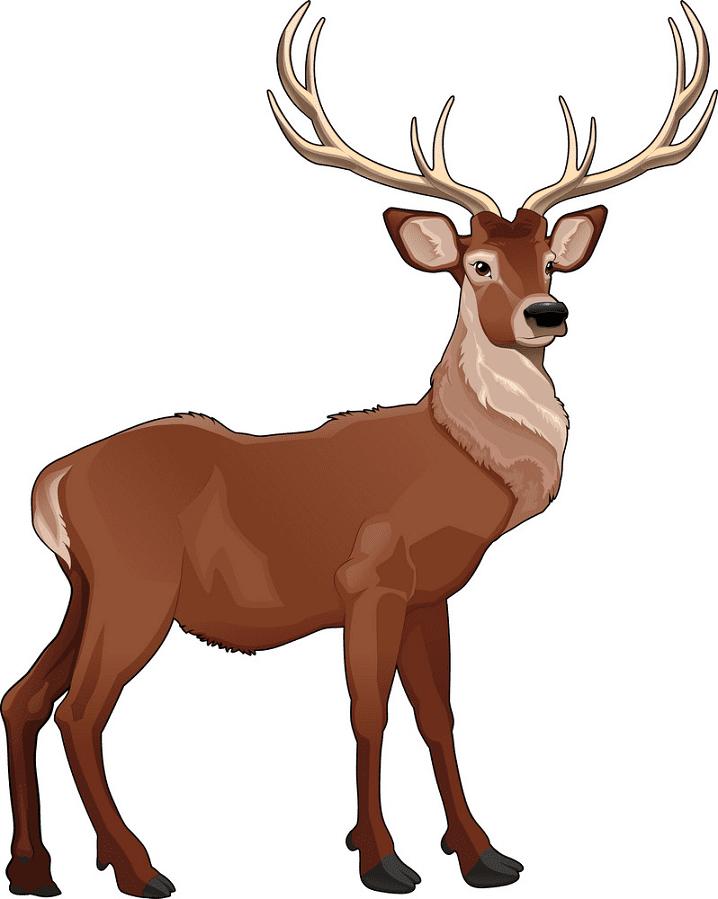 Deer clipart free