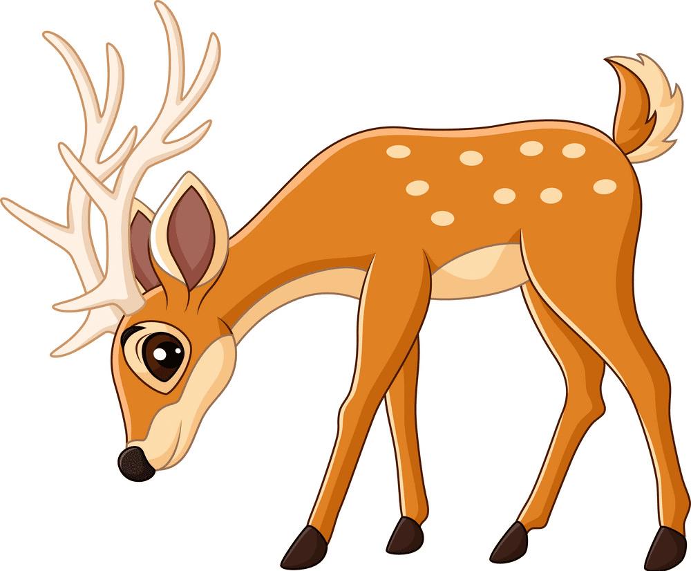 Deer clipart image