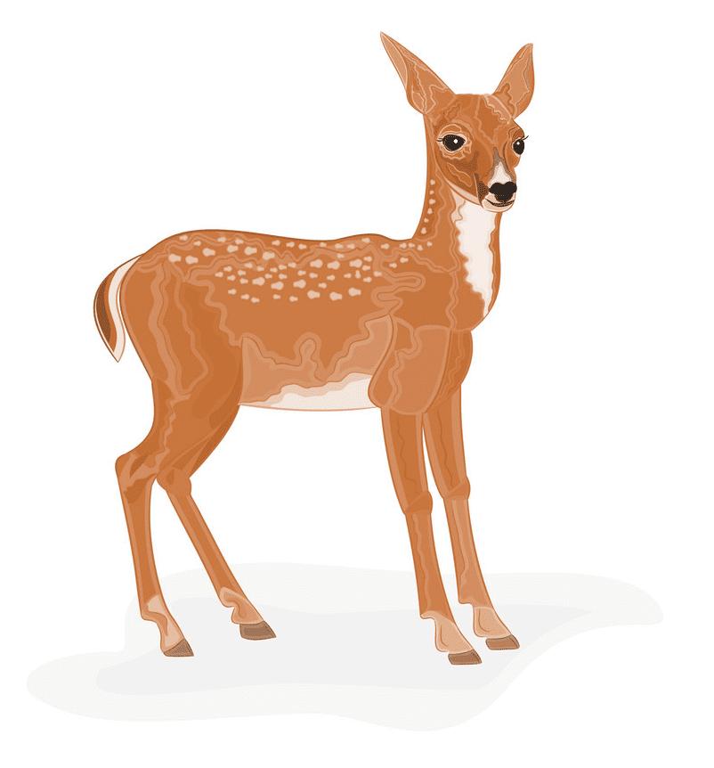 Deer clipart png image