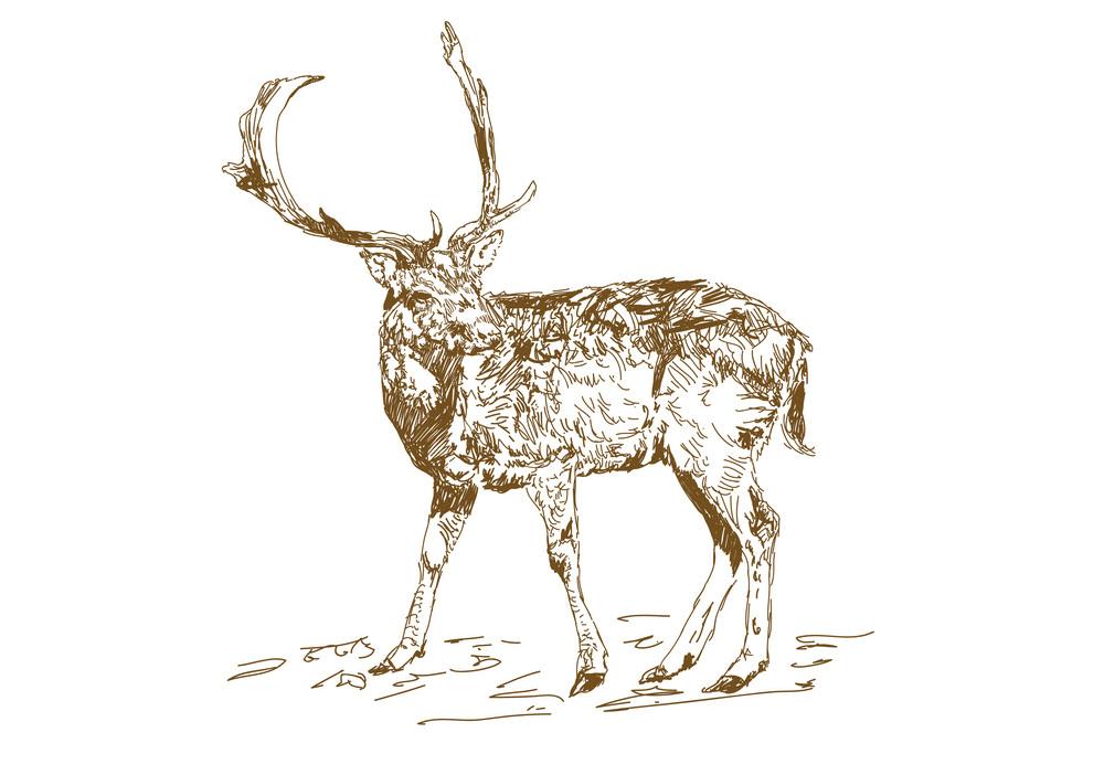 Deer clipart png images