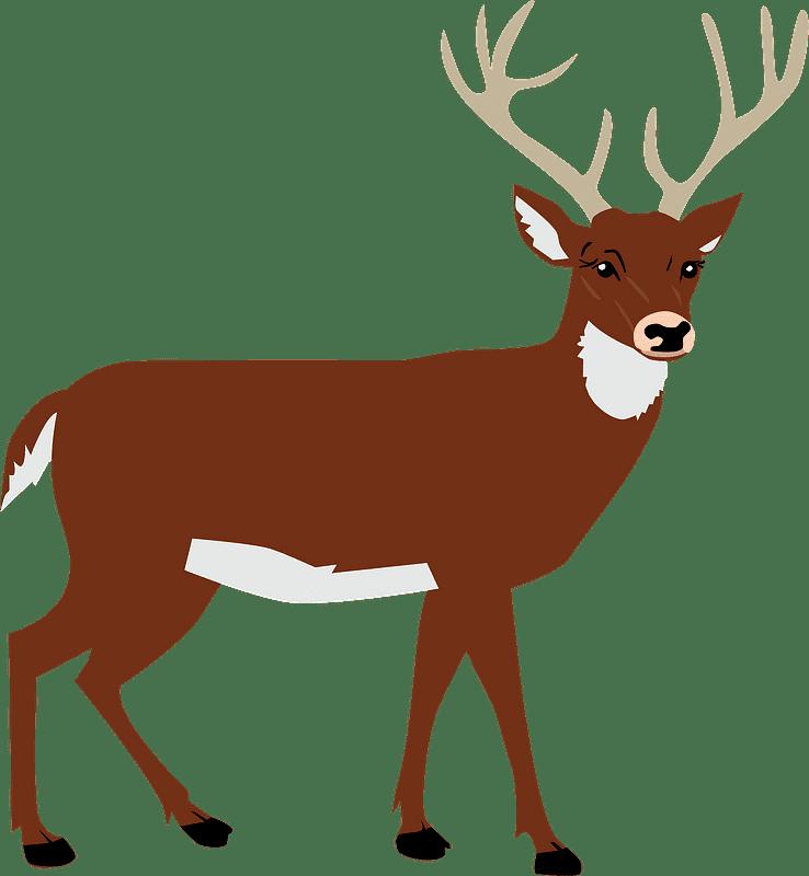 Deer clipart transparent background 3