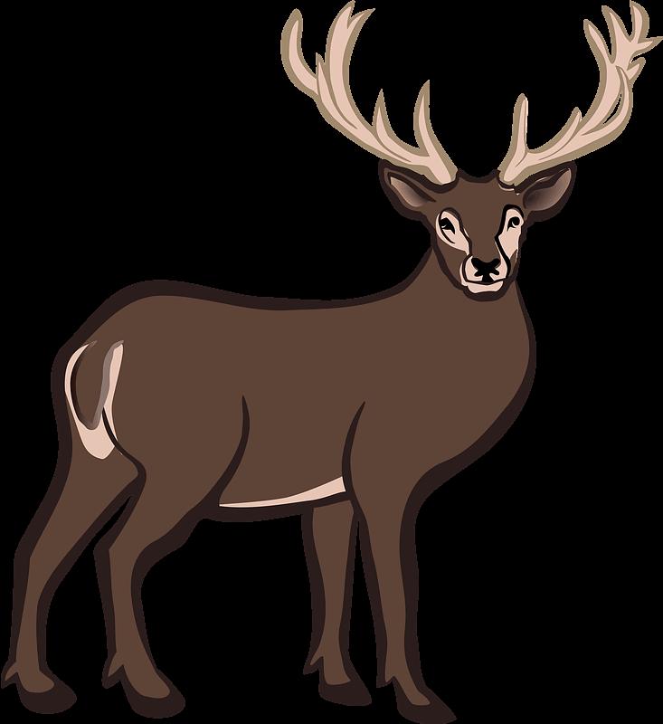 Deer clipart transparent background