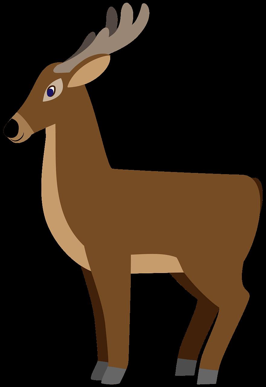 Deer clipart transparent images