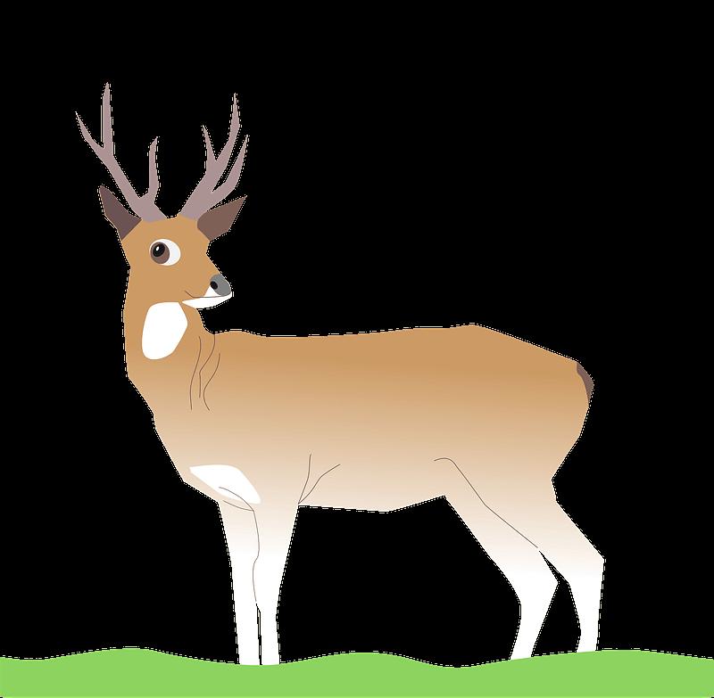 Deer clipart transparent png