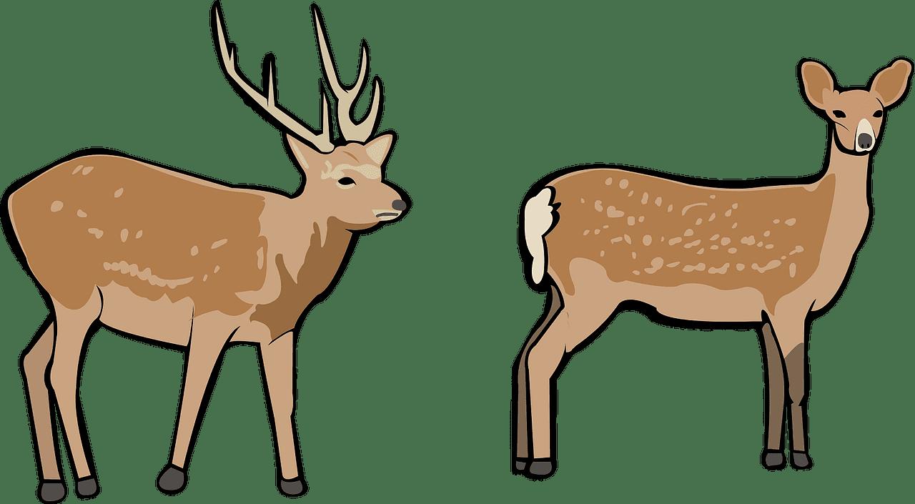 Deers clipart transparent background