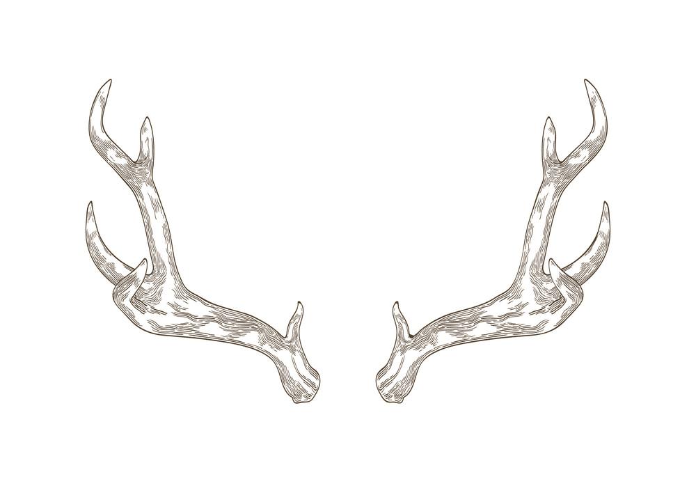 Download Deer Antlers clipart