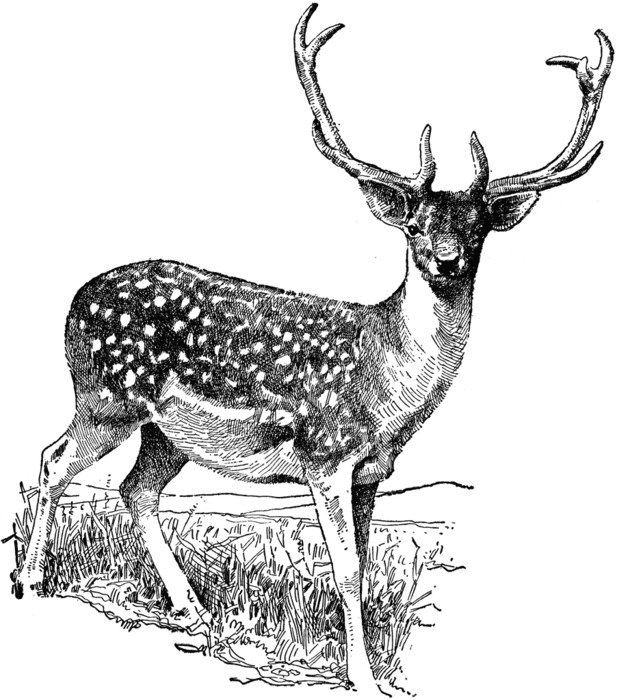 Download Deer Clipart Black and White