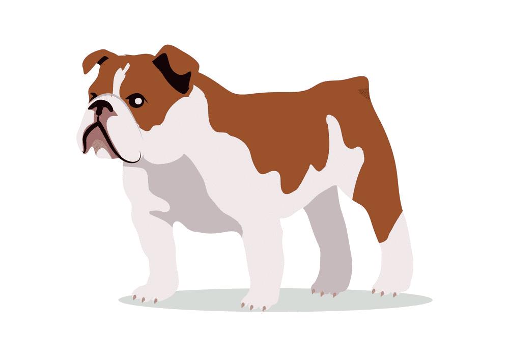 English Bulldog clip art png