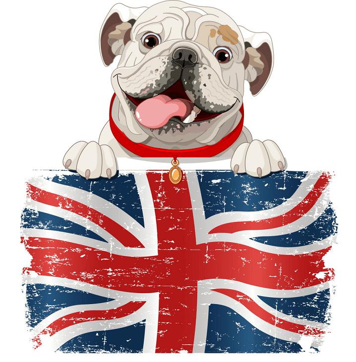 English Bulldog clipart free image