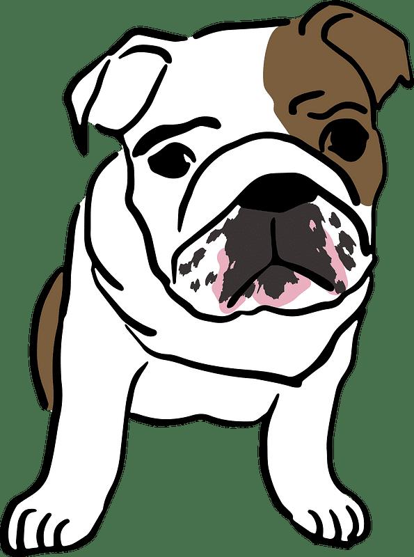 English Bulldog clipart transparent background