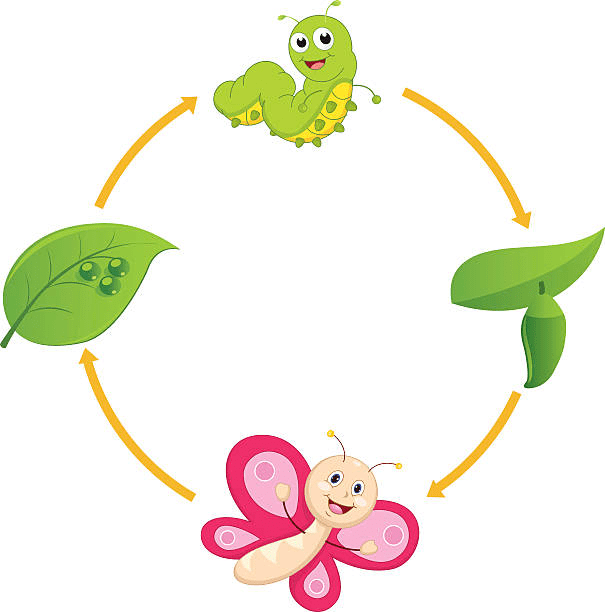 Free Caterpillar to Butterfly clipart