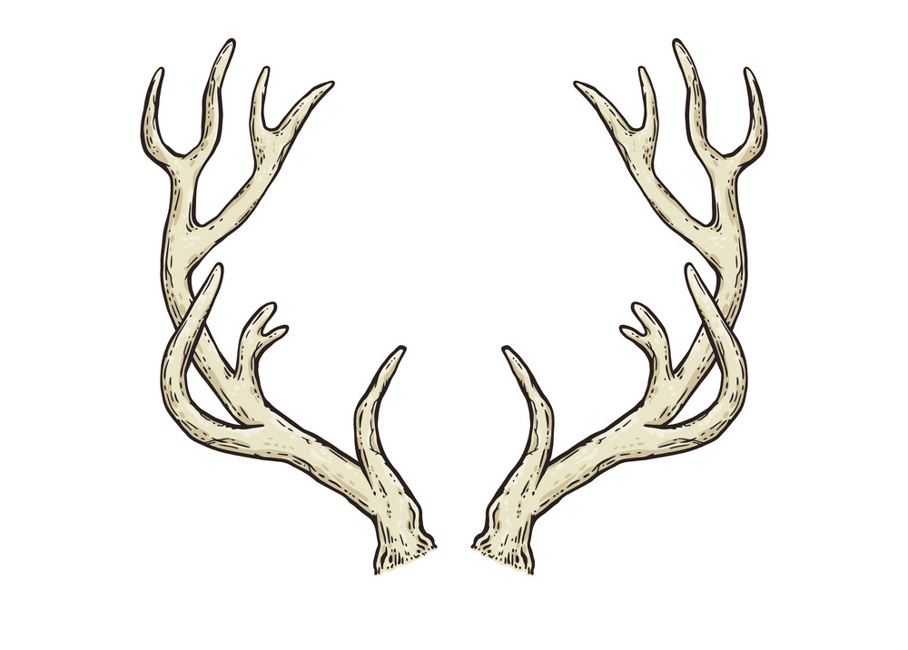 Free Deer Antlers clipart png images