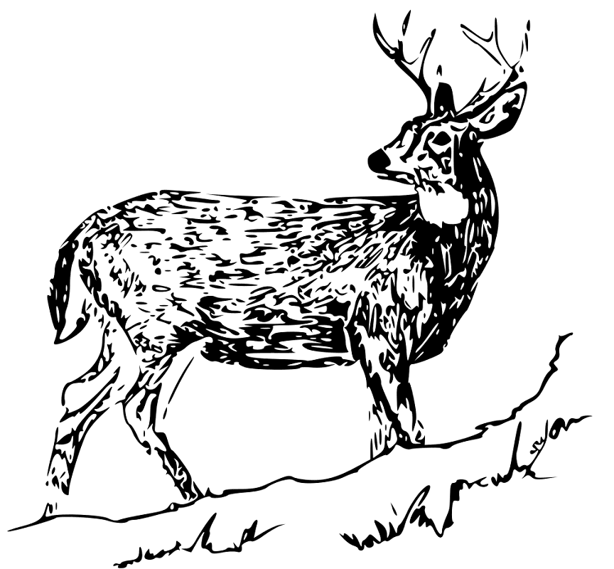 Free Deer Clipart Black and White