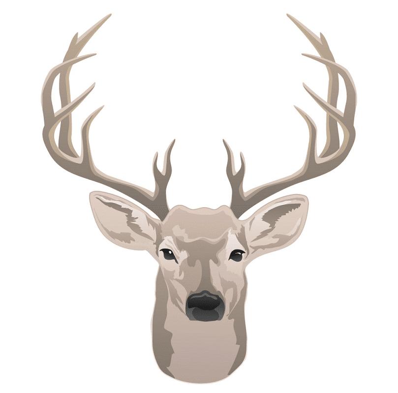 Free Deer Head clipart