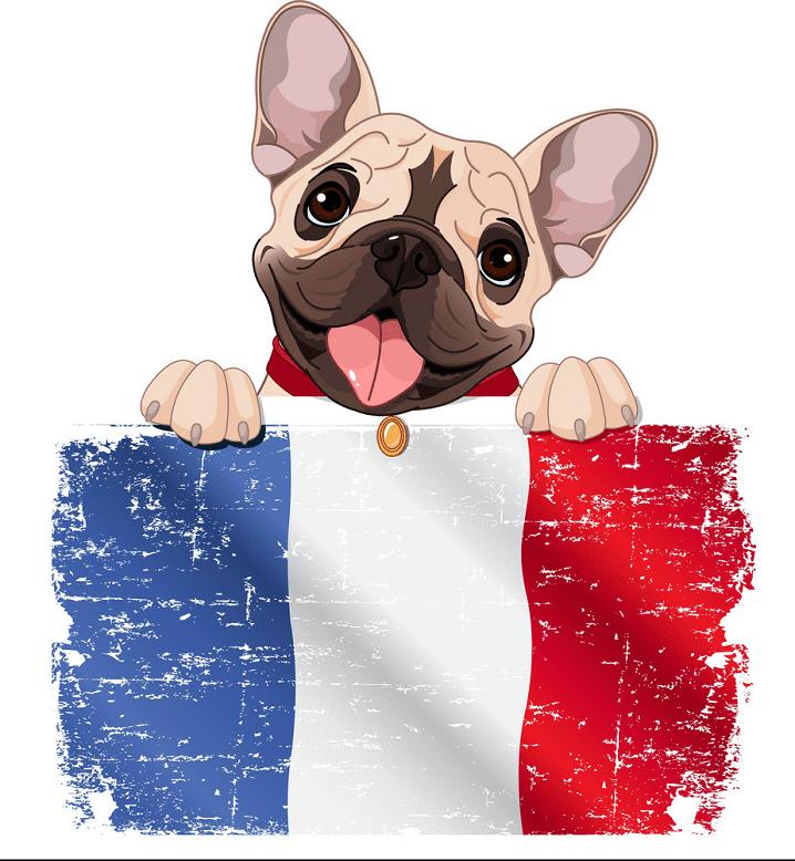 Free French Bulldog clipart image