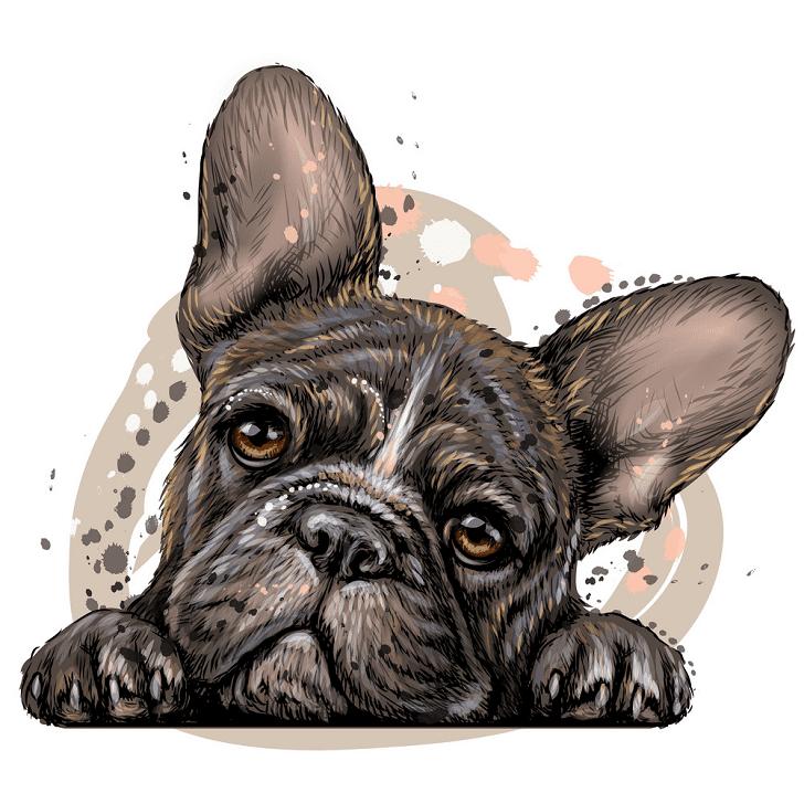 Free French Bulldog clipart